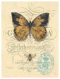 Honeybee Papillon Prints by Chad Barrett