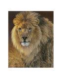Power and Presence: African Lion Kunstdrucke von Joni Johnson-godsy