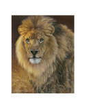 Power and Presence: African Lion Print by Joni Johnson-godsy