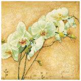 Elegante Orchidea Prints by Matina Theodosiou