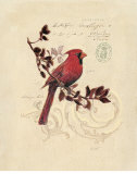Filigree Cardinal Affiches par Chad Barrett