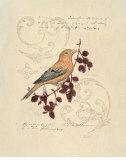 Filigree Songbird Kunstdrucke von Chad Barrett