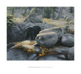 Boulder Bruin Prints by Stephen Lyman