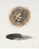 Field Study Nest Poster by Jurgen Gottschlag