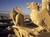 Gargoyles of the Notre Dame Cathedral, Paris, France Photographic Print by David Barnes