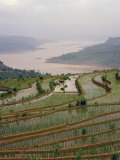 Terraced Rice Paddy on the Yangtze River, Three Gorges, China, Photographic Print