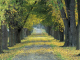 Tree-Lined Road in Autumn, Louisville, Kentucky, USA Photographic Print by Adam Jones