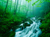 Linn Cove Creek Cascading Through Foggy Forest, Blue Ridge Parkway, North Carolina, USA Photographic Print by Adam Jones