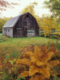 Barn and Fall Colors near Jericho Center, Vermont, USA Photographic Print by Darrell Gulin