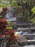 Spa and Gardens of Tabacon Hot Springs, Costa Rica Photographic Print by Michele Westmorland