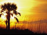 Sunset near Folley Beach, Charleston, South Carolina, USA Photographic Print by Julie Eggers