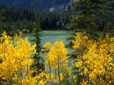 Aspen above Pear Lake in Autumn, Boulder Mountain, Dixie National Forest, Utah, USA Photographic Print by Scott T. Smith