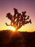 Dawn on the Mojave Desert, California, USA Photographic Print by Jerry Ginsberg