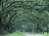 Historic Wormsloe Plantation, Savannah, Georgia, USA Photographic Print by Joanne Wells