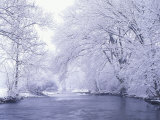 Snow Covered Branches Overhanging Beargrass Creek, Louisville, Kentucky, USA Photographic Print by Adam Jones