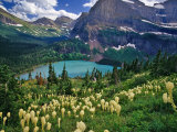 Beargrass above Grinnell Lake, Many Glacier Valley, Glacier National Park, Montana, USA Photographic Print by Chuck Haney