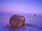 Winter Straw Bales near Cartwright, North Dakota, USA Photographic Print by Chuck Haney