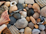 Shells on Edisto Beach, Edisto Beach State Park, South Carolina, USA Photographic Print by Scott T. Smith