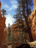 Wall Street, Navajo Loop Trail, Bryce Canyon National Park, Utah, USA Photographic Print by Jamie & Judy Wild