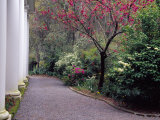 Walkway in Gardens, Magnolia Plantation and Gardens, Charleston, South Carolina, USA Photographic Print by Julie Eggers