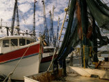 Shrimp Boats Tied to Dock, Darien, Georgia, USA Photographic Print by Joanne Wells