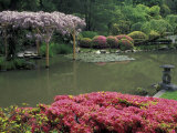 Japanese Garden with Rhododendrons and Wysteria, Seattle, Washington, USA Photographic Print by Jamie & Judy Wild