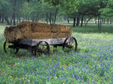 Old Wagon and Wildflowers, Devine, Texas, USA Photographic Print by Darrell Gulin