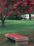 Crab Apple Trees in Prescott Park, New Hampshire, USA Photographic Print by Jerry & Marcy Monkman