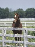 Thoroughbred Race Horse, Kentucky Horse Park, Lexington, Kentucky, USA Photographic Print by Adam Jones