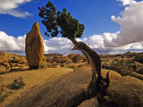 Balanced Rock and Juniper, Joshua Tree National Park, California, USA Photographic Print by Chuck Haney