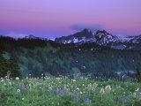 Paradise Twilight, Mt. Rainier National Park, Washington, USA Photographic Print by Rob Tilley
