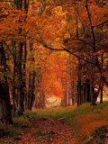 Old Wagon Road from Cades Cove, Tennessee, USA Photographic Print by Adam Jones
