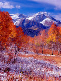Fall Aspen Trees and Early Snow, Timpanogos, Wasatch Mountains, Utah, USA Photographic Print by Howie Garber