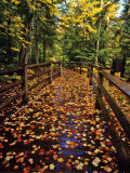 Boardwalk Full of Maple Leaves at Tahquamenon State Park, Michigan, USA Stampa fotografica di Chuck Haney