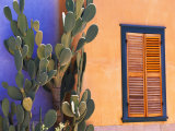 Southwestern Cactus and Window, Tucson, Arizona, USA Photographic Print by Tom Haseltine