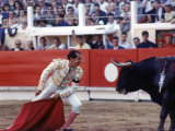 Matador Luis Miguel Dominguin Performing During a Mano a Mano Bullfight at the Bayonne Bullring Premium Photographic Print by James Burke
