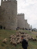 Man and sheep Surrounding Avila, Rebuilt by Alfonso VI in 1090 Ad, 9 Gate Entrance to the City Premium Photographic Print by Eliot Elisofon