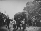 Boys Walking Near an Elephant down the middle of Atlantic St. near Nevins from the Barnes Circus Premium Photographic Print by Wallace G. Levison