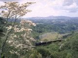 Narrow Gauge Rail Line Transporting Goods Between Guatemala and El Salvador, Photographic Print
