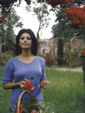 Sophia Loren in the Garden Cutting Roses Premium Photographic Print by Alfred Eisenstaedt