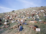 "Extras Playing Dead People Hold Numbered Cards Between Takes During Filming of ""Spartacus"" Lámina fotográfica de primera calidad por J. R. Eyerman"