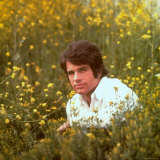 Actor Warren Beatty Sitting in Field of Flowers Premium Photographic Print by Ralph Crane
