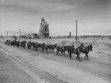 Trademark Twenty Mule Team of the US Borax Co. Pulling Wagon Loaded with Borax Photographic Print by Ralph Crane