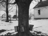 Three Pails Laying Against the Tree for Catching Maple Being Tapped in the Catskill Mt. Region Premium Photographic Print by Richard Meek