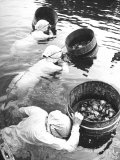 Three Female Mikimoto Pearl Divers with Buckets as They Prepare to Dive Down 20Ft. for Oysters Premium Photographic Print by Alfred Eisenstaedt