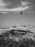 Towering Palm Tree Swayed by Wind as It Stands Next to House on Sandy Beach in Desolate Area Photographic Print by Eliot Elisofon