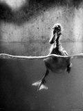 Underfed Duck Struggling in Detergent Fotografisk tryk af Al Fenn