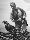 Great Naturalist/Ornithologist Roger Tory Peterson Taking Notes as He Inspects a Young Osprey, Photographic Print