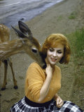 Gina Lollobrigida Feeding and Petting a Fawn Premium Photographic Print by Peter Stackpole