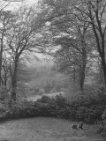 Wooded Area on Cliveden, Estate Owned by Lord William Waldorf Astor and Wife Lady Nancy Astor Premium Photographic Print by Hans Wild